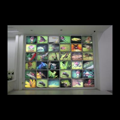 李山,重组方案,80×60cm / 36,数位输出、灯箱,1996-2003